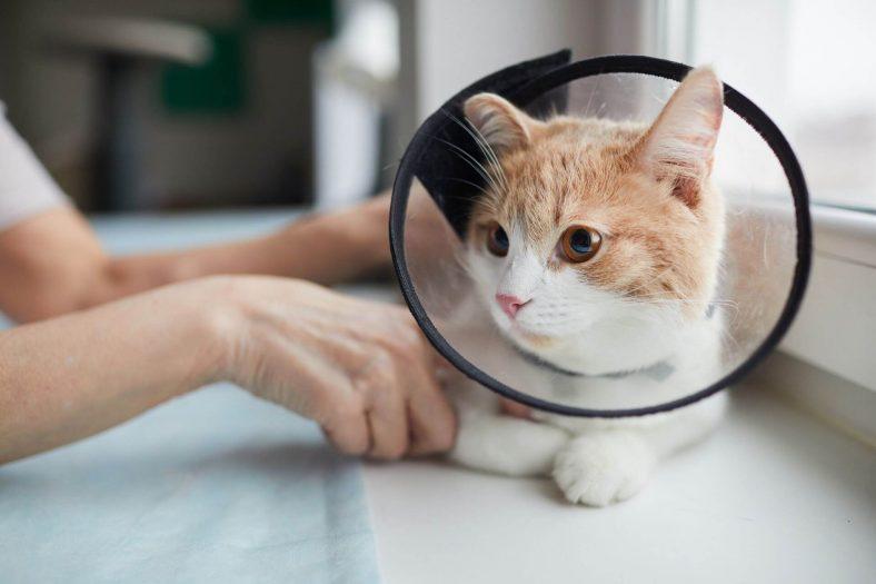 Kedi Mantarı Sirke Tedavisi