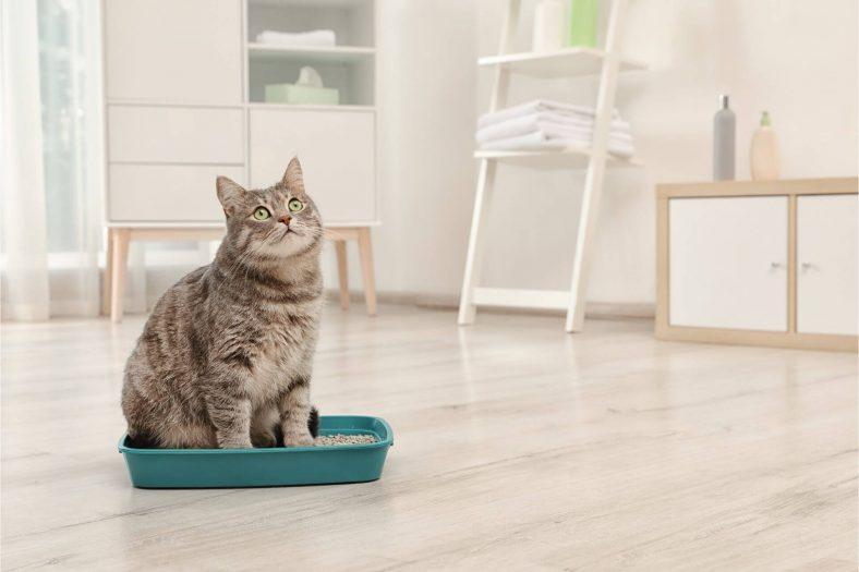 Kedi Tuvaleti Nereye Konmalı?
