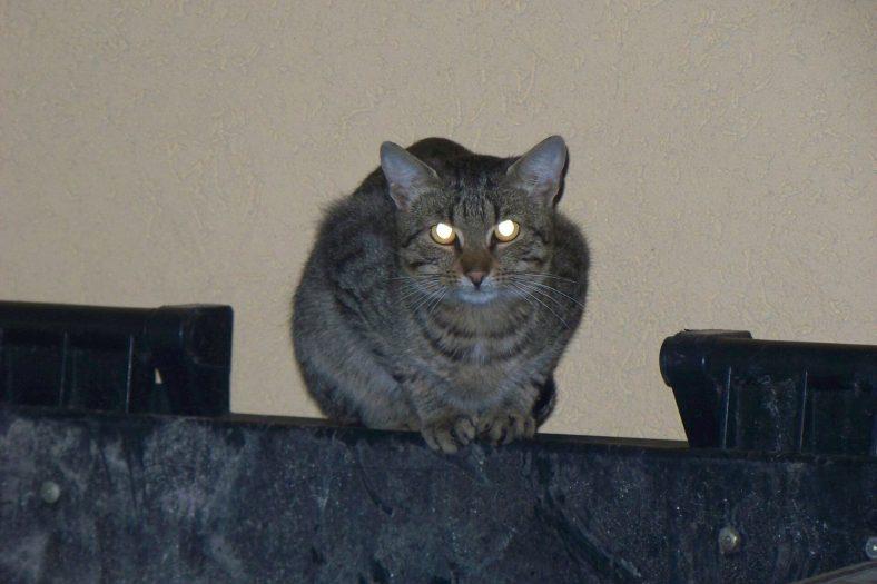 Kediler Gece Nasıl Görür?