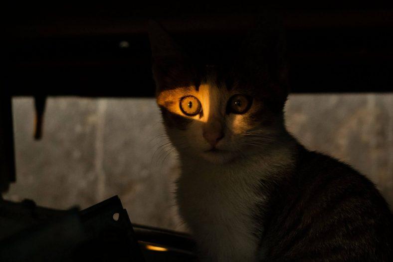 Kediler Karanlığı Sever mi?