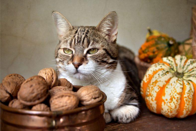 Kediler Neden Ceviz Yiyemez?