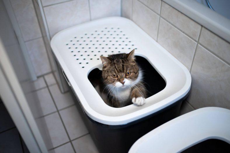 Kediler Tuvaletlerini Ne Kadar Tutabilir?