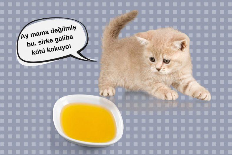 Kedilerde Egzamaya Sirkeli Çözüm