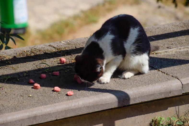Kedilere Sucuk Zararlı mı?