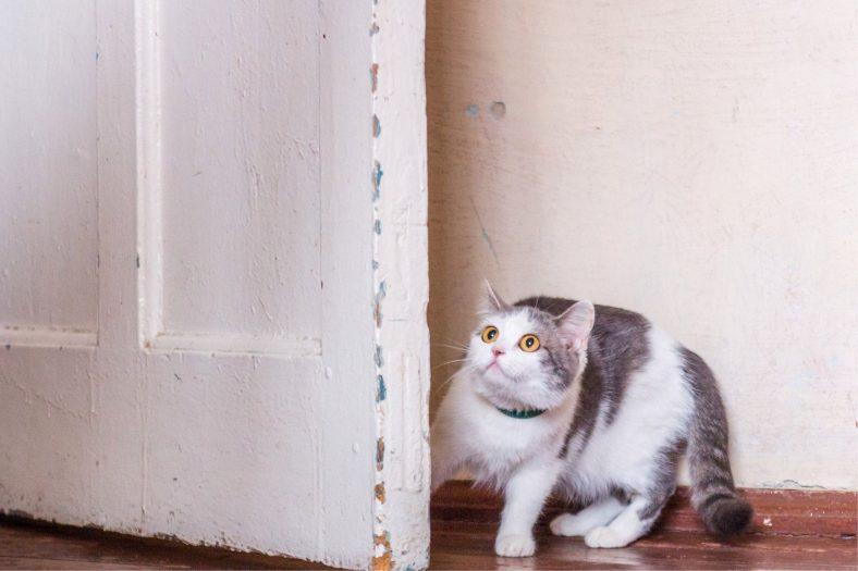 Kedileri Korkutan Sesler