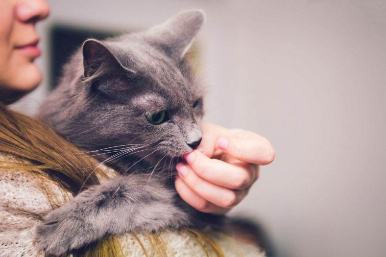 Kedilerin Sahibinin Saçını Yalaması