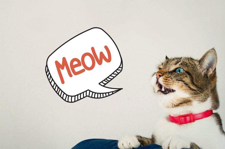 Kedilerin Sesi Kısılması