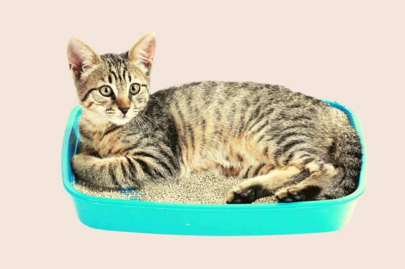 Kedinin Kum Kabında Yatmasının Sebebi