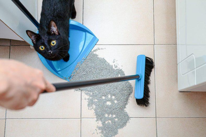 Kedinin Kumu Eşmesinin Nedenleri