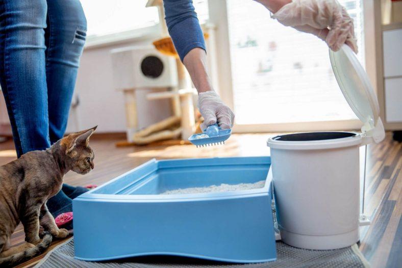 Kedi Kakası Temizlenmesi