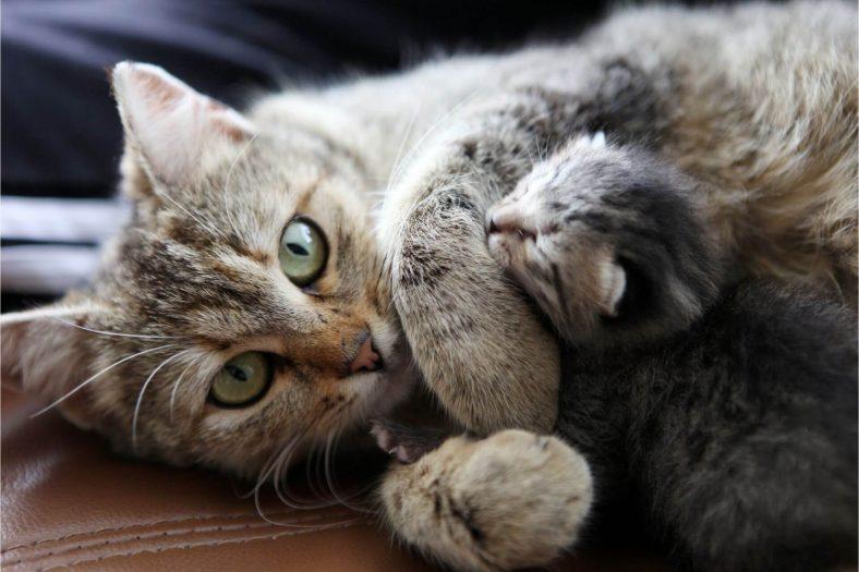 Kedi Yavrusunu Neden Yer?