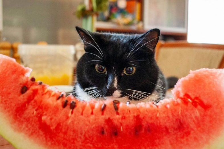Kediler Hangi Meyveleri Yer?