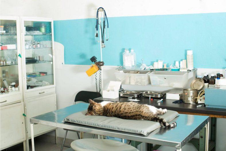 Kediler Narkozun Etkisinden Ne Zaman Çıkar?