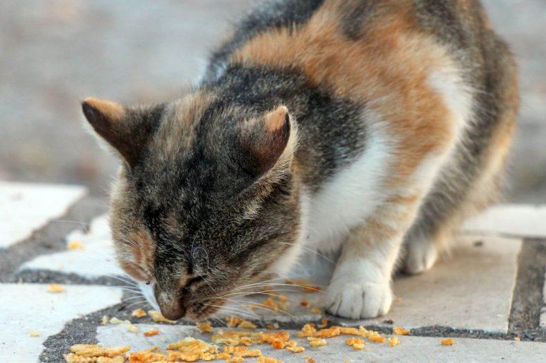 Kediler Patatesi Nasıl Yiyebilir?