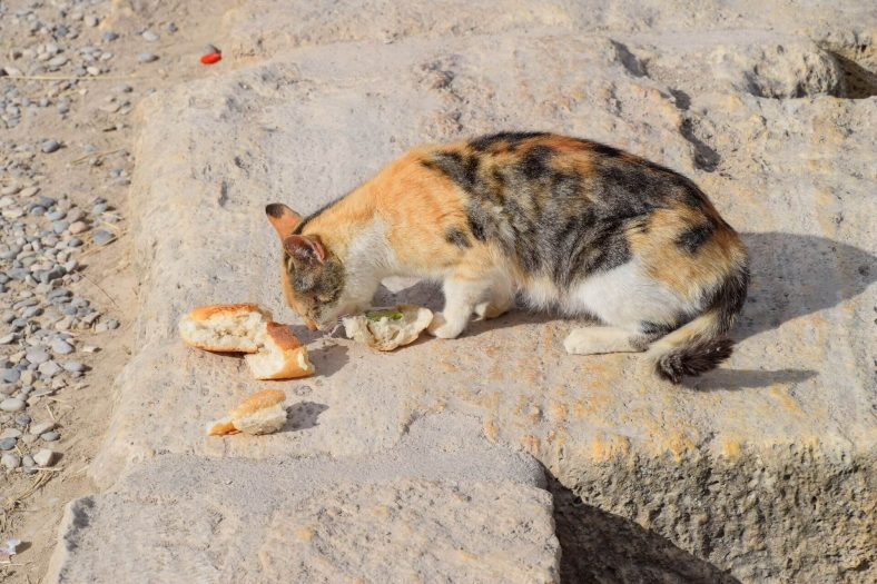 Kedilere Ekmek Verilir mi?
