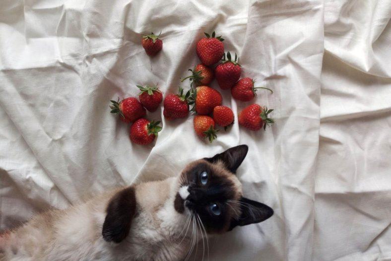 Kedilere Meyve Verilir mi?