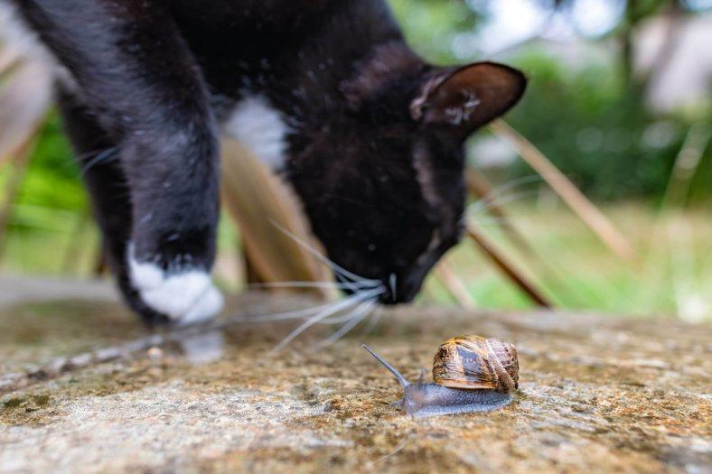 Kedilere Salyangoz Zararlı mı?