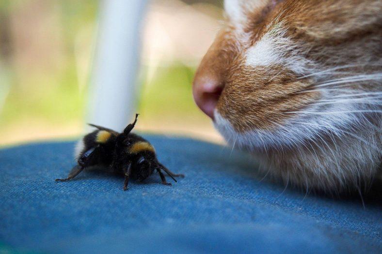 Kedilerin Böcek Yemesi Zararlı mı?